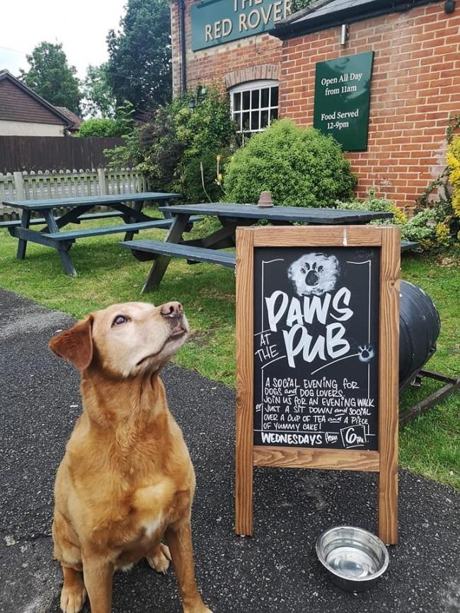 Pub crowned the most dog-friendly pub in the country