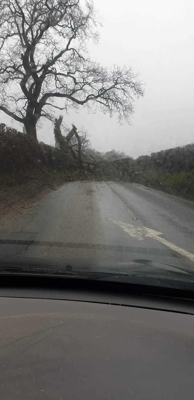The fallen tree on the A27 between Shootash and Romsey