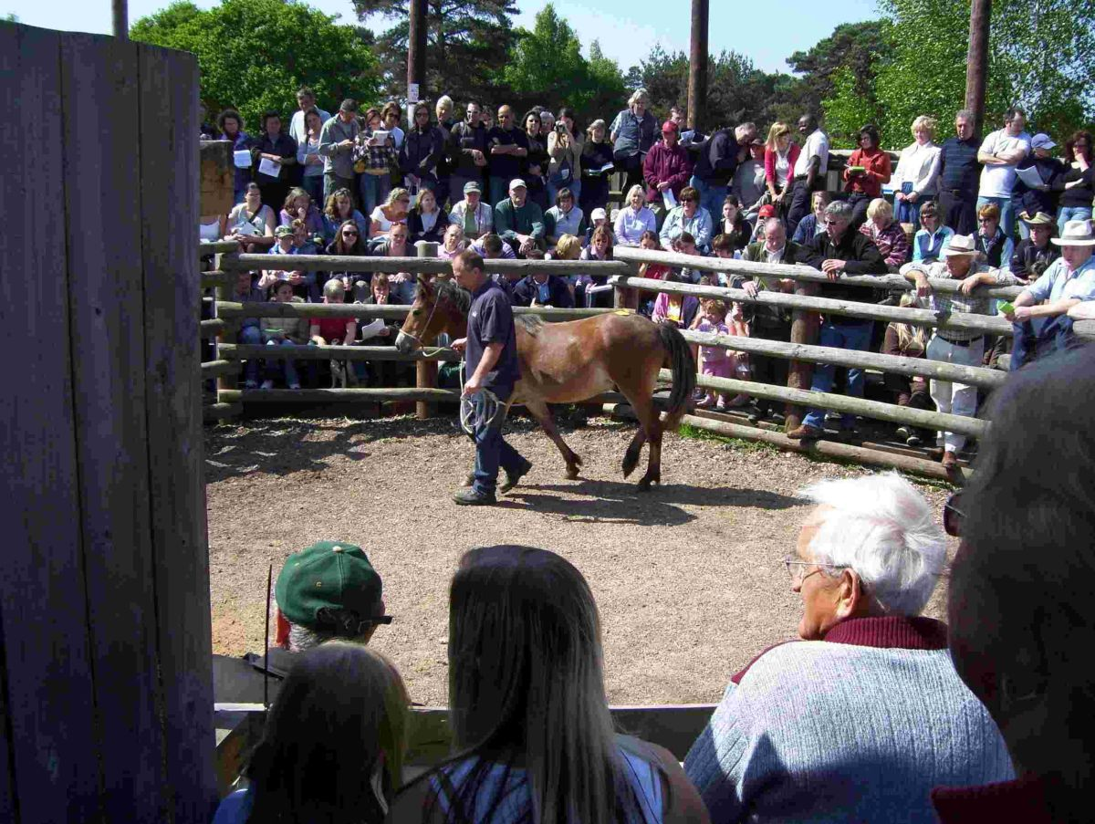 New Forest pony sales have been cancelled due to an outbreak of strangles, a highly contagious respiratory infection