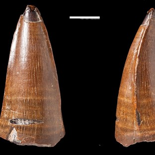 The tooth was found at Chesil, Dorset (Mark Young and Lorna Steel/PA Wire)