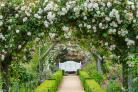 Mottisfont rose garden. Picture: National Trust Images/ Marianne Majerus.